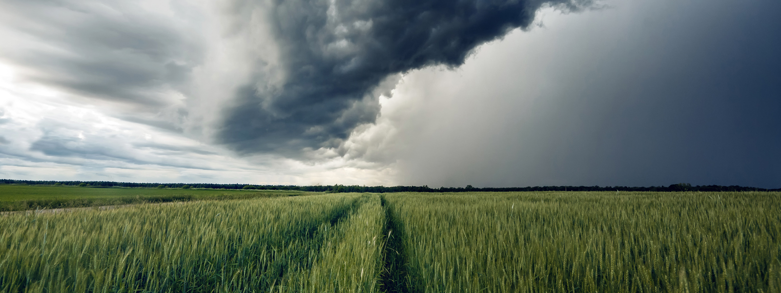 Storm clouds over wheat field