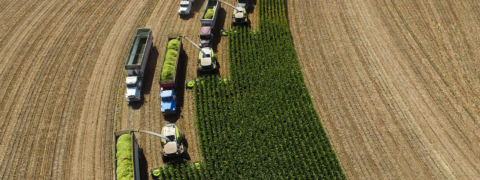 Four JAGUAR forage harvesters in the field