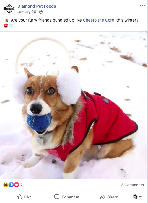 Diamond Pet Food Facebook Post of Cheeto the Corgi in the Snow Wearing Earmuffs and a Vest | Woodruff