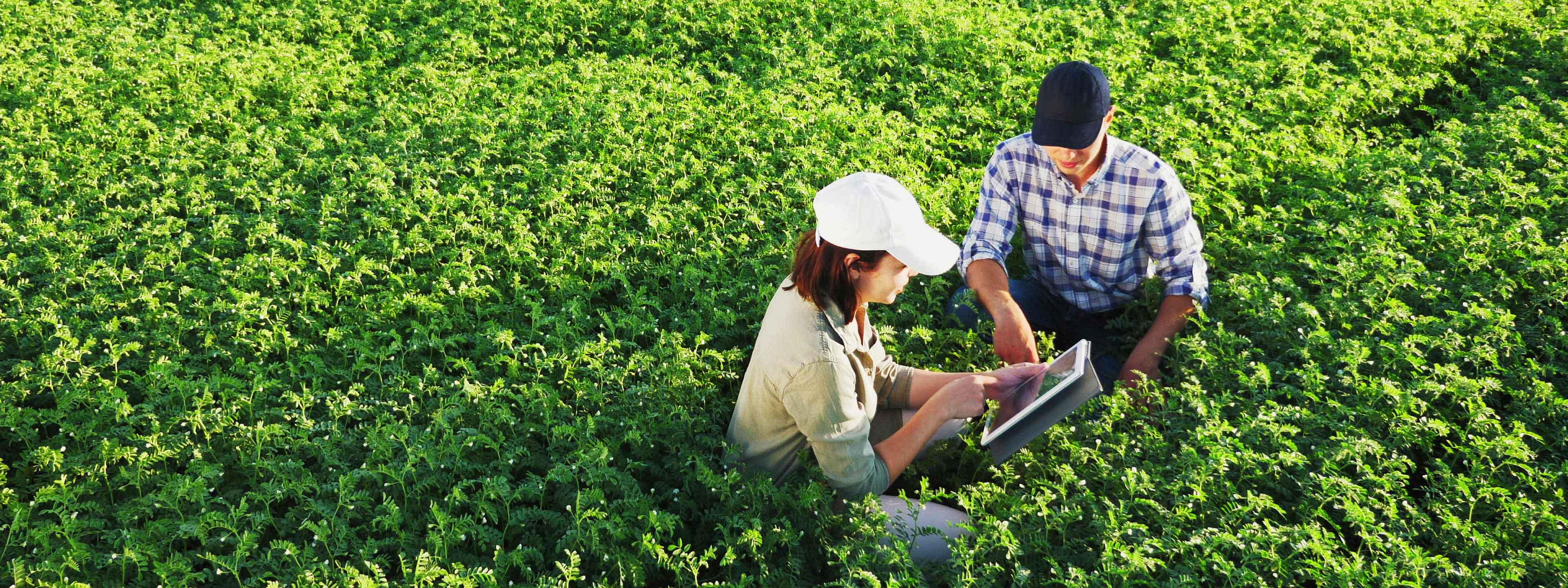 Salesman Talking to a Farmer in the Field   Woodruff