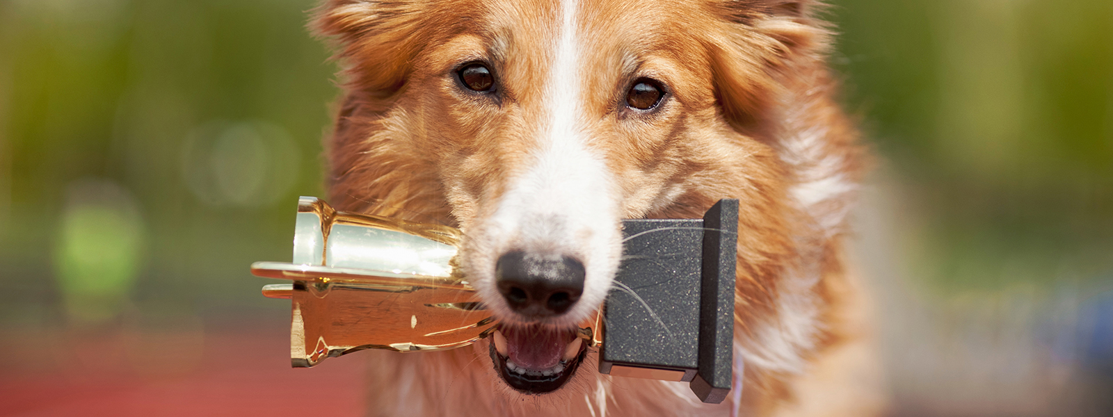Dog Holding a Trophy in Its Mouth | Woodruff